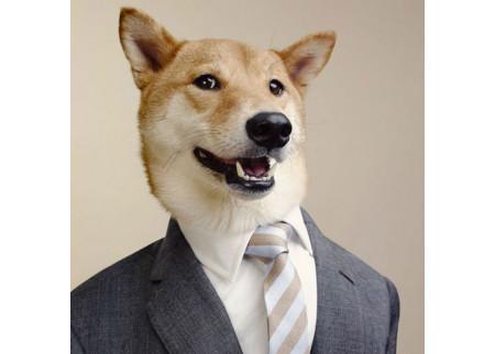 Ovaj pas verovatno zarađuje više od vas